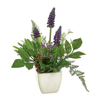 Grape Hyacinth Blossom and Fern Plant in Pot AGGR5269 39343149
