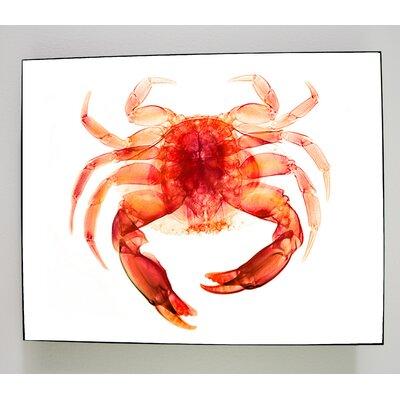 X-ray Designs Red Crab Graphic Art Plaque art-redcrabwhite16x20