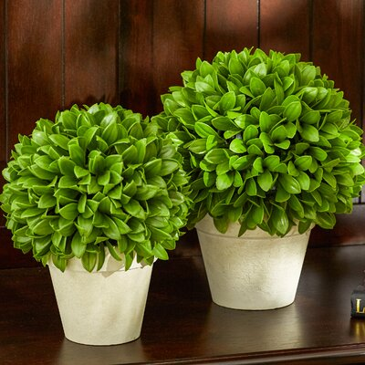 Kinsley Ball Plant Size: 10