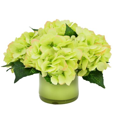 Green Hydrangea in Glass Vase