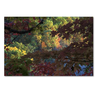 Multi Colored Maples Photographic Print on Wrapped Canvas Size: 12