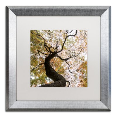 Under a Japanese Maple 2 Framed Photographic Print