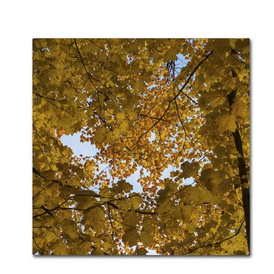 Golden Canopy of Autumn Photographic Print on Wrapped Canvas