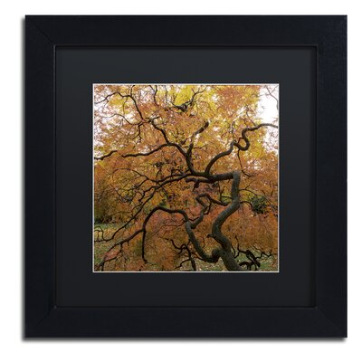 October Japanese Maple Framed Photographic Print