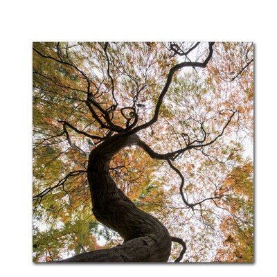 Under a Japanese Maple 2 Photographic Print on Wrapped Canvas