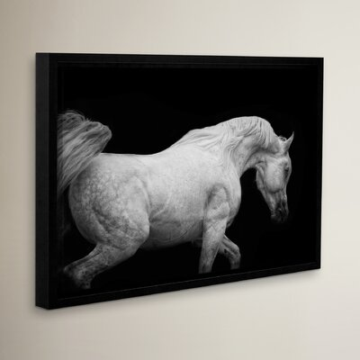 Arabian Stallion Framed Photographic Print on Wrapped Canvas