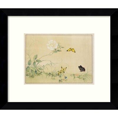 White Rose & Butterflies Framed Graphic Art