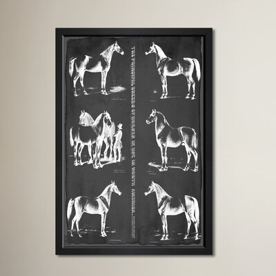 Principal Horse Breeds Framed Graphic Art