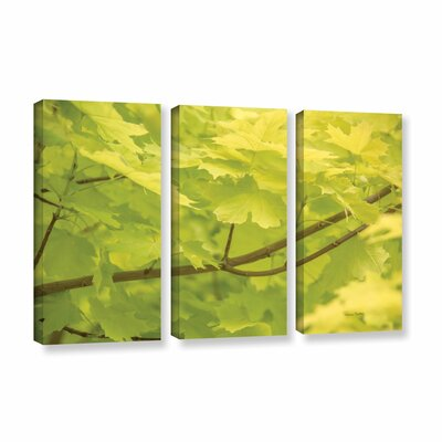 Spring Leaves II 3 Piece Photographic Print on Gallery Wrapped Canvas Set