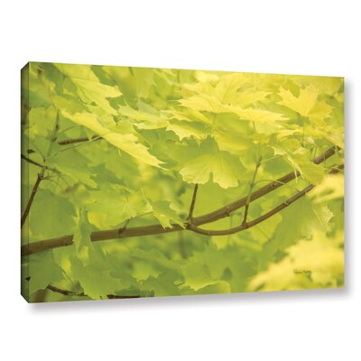 Spring Leaves II Photographic Print on Gallery Wrapped Canvas