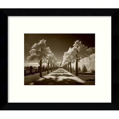 Summer Lights Path Framed Wall Art