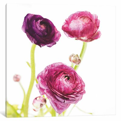 Spring Ranunculus I Graphic Art on Wrapped Canvas Size: 12