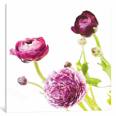 Spring Ranunculus II Graphic Art on Wrapped Canvas Size: 12