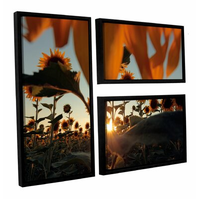 Sunflower Field 3 Piece Framed Photographic Print Set