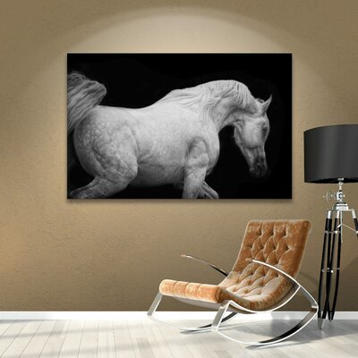 Arabian Stallion Photographic Print on Wrapped Canvas