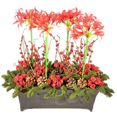 Nerine Lily Flowering Plant in Planter