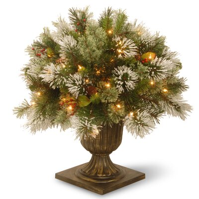 Pine Floor Plant in Urn