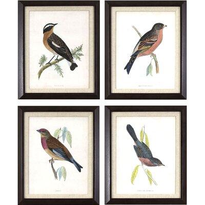 Antique Bird Studies 4 Piece Framed Graphic Art Set