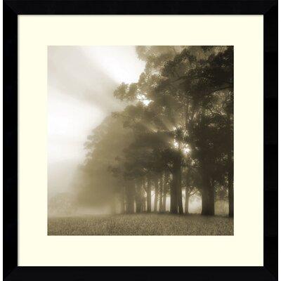 'Misty Forest' Framed Photographic Print THPS2546 36959529