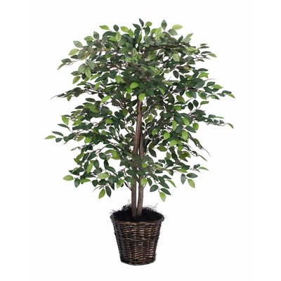 Mini Ficus Tree in Busket