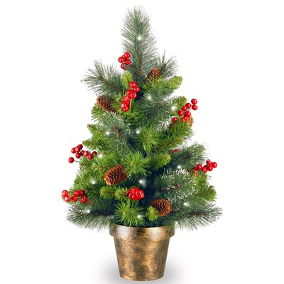 Cambridge Spruce 2' Artificial Christmas Tree with White Lights