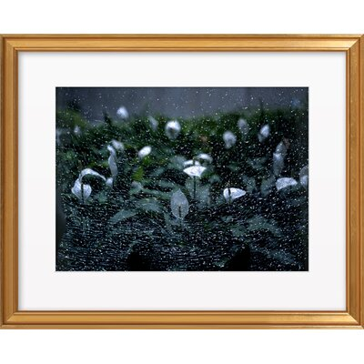 Anthrium Dance by Yaniv Alon Framed Photographic Print Frame Color: Gold, Size: 16.6