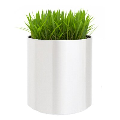 Stainless Steel Pot Planter Size: Small, Color: White CSSCP-S-WHT