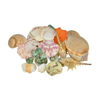 Mixed Bagged Shells and Conch Figurine