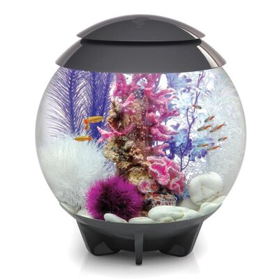 Halo Aquarium Bowl Size: 60 H x 60 W x 60 D, Color: Gray