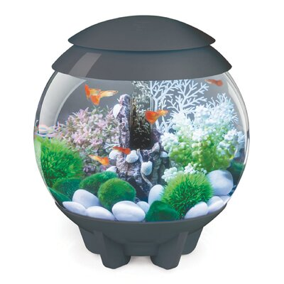 Halo Aquarium Bowl Color: Gray, Size: 30 H x 30 W x 30 D