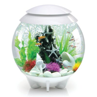 Halo Aquarium Bowl Size: 30 H x 30 W x 30 D, Color: White