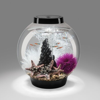 4 Gallon Classic Aquarium Bowl Color: Clear, Size: 12 H x 12 W x 12 D