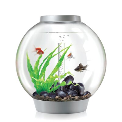 4 Gallon Classic Aquarium Bowl Color: Silver, Size: 60 H x 60 W x 60 D