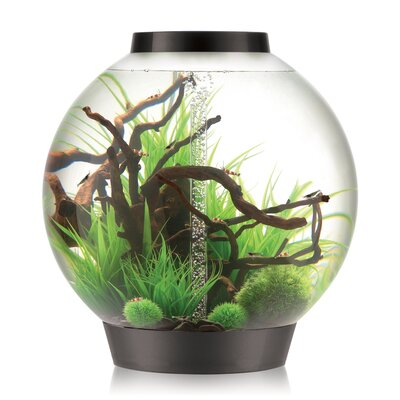 4 Gallon Classic Aquarium Bowl Color: White, Size: 20.5 H x 19.75 W x 19.75 D