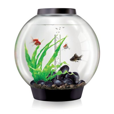 4 Gallon Classic Aquarium Bowl Color: Black, Size: 60 H x 60 W x 60 D