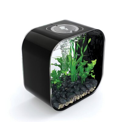 Life Aquarium Tank Size: 60 H x 60 W x 60 D, Color: Black
