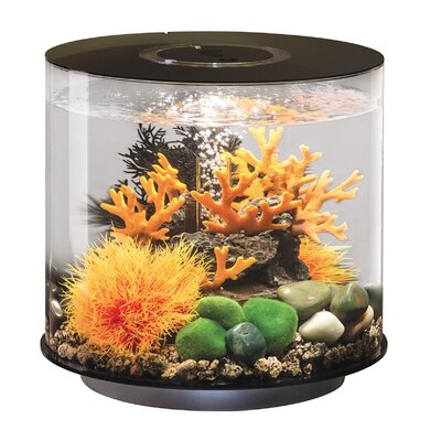 4 Gallon Tube 15 MCR Aquarium Tank Color: Black, Size: 14.5 H x 16 W x 16 D