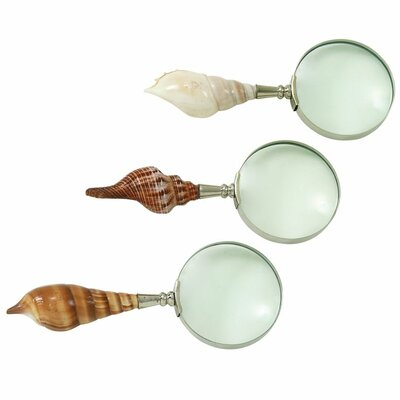 3 Piece Decorative Shell Magnify Set (Set of 3) 19093