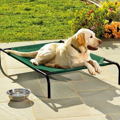 Briard Large Weather-Resistant Raised Mesh Pet Bed