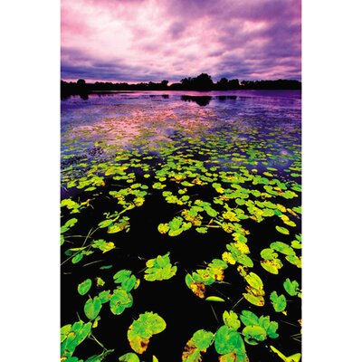 Lilly Pad Sunset Gallery By Nathan Lovas Photographic Print On Wrapped Canvas