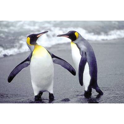 Penguins Antartica Gallery By Jonathan Chester Photographic Print On Wrapped Canvas