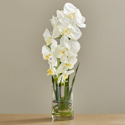 Phalaenopsis in Acrylic Water Vase Flower Color: White BBMT3860 40426001