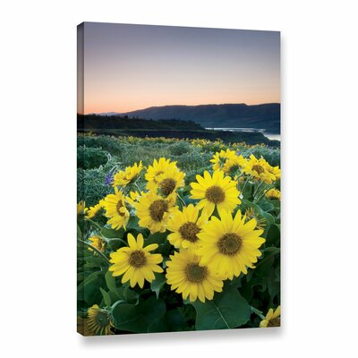 Balsamroot Photographic Print on Wrapped Canvas Size: 18