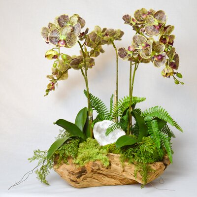 Orchid and White Geode in Wood Bowl Color: Green F1417WG