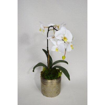Orchid Floral Arrangement Flower Color: White
