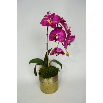 Orchid Floral Arrangement Flower Color: Fuschia