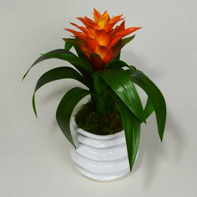 Bromeliad Floral Arrangement Flower Color: Orange