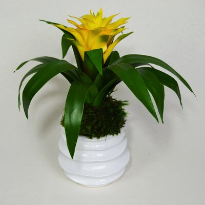 Bromeliad Floral Arrangement Flower Color: Yellow