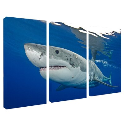 'Shark' 3 Piece Photographic Print on Wrapped Canvas Set
