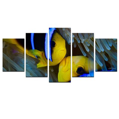 'Underwater Rays Duo' by Christopher Doherty 5 Piece Photographic Print on Wrapped Canvas Set CD846-GWC5PC